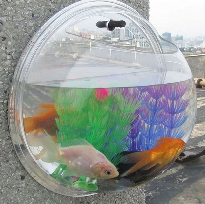 wall mounted fish tank acrylic bowl life changing products. Black Bedroom Furniture Sets. Home Design Ideas