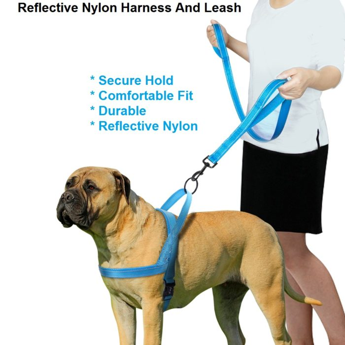 Harness And Leash