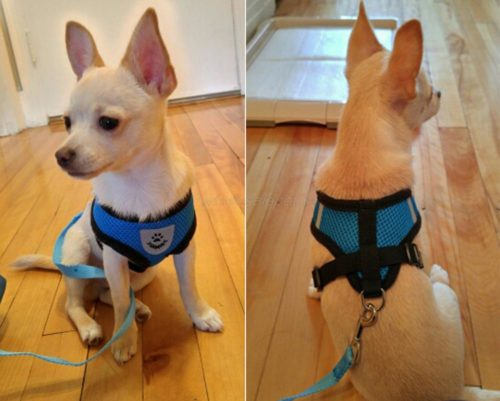 Breathable Mesh Small Dog Harness