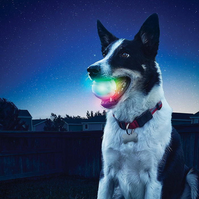 Light Up LED Dog Ball