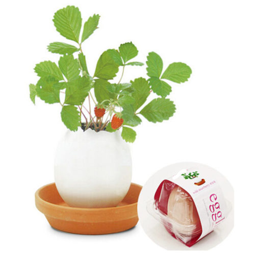 Creative DIY Egg Potted Plant