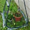 Mini Greenhouse-Portable Plant Grow Tent Plant Cover