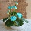 Lotus Plant Aquatic Flower Seed