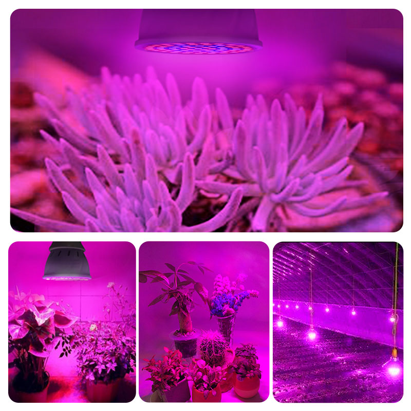 Led Grow Lights Indoor Photosynthesis Life Changing Products