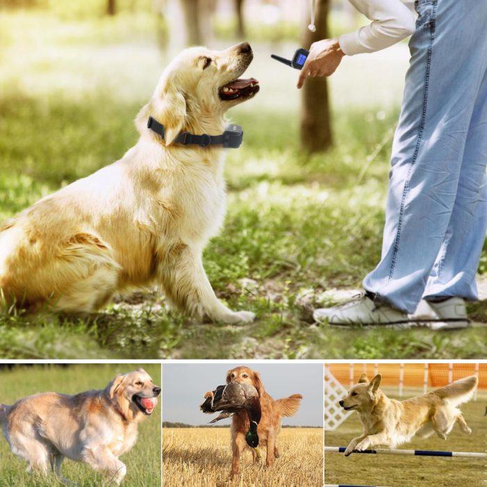 Bark Collar Dog Training Device