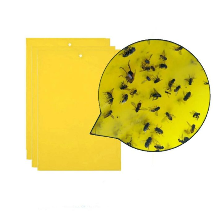 Ant Killer Sticky Board