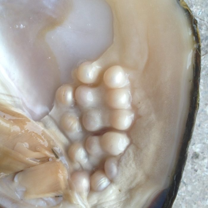 Oyster Pearl Freshwater Jewelry