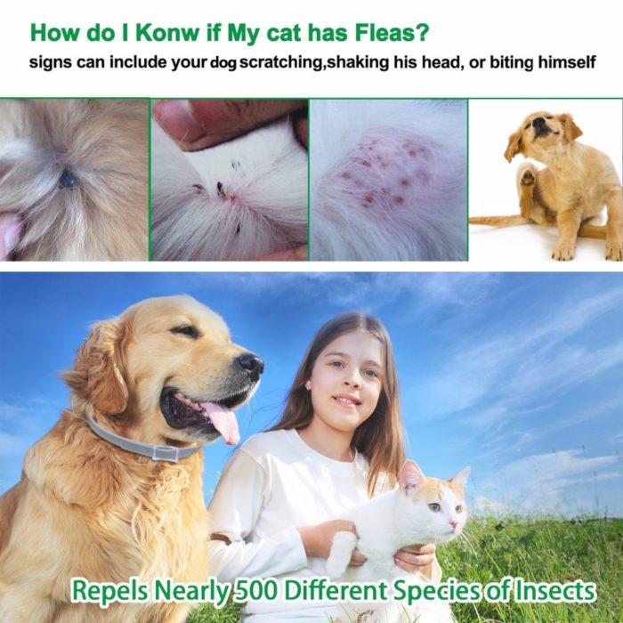 Flea Collar Dog Leash