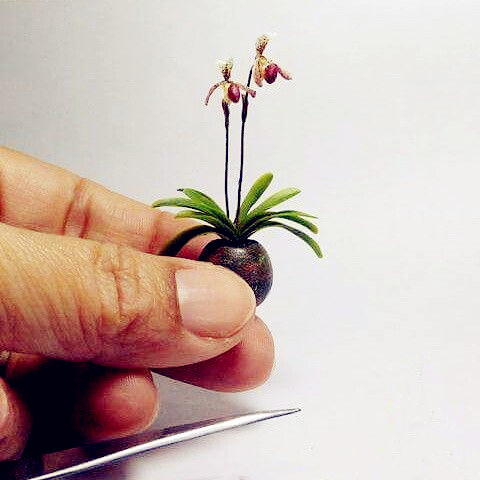 Orchid Plant Seeds Mini Flowers