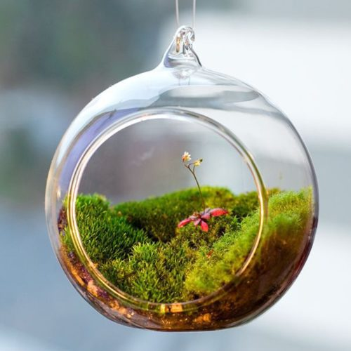 Hanging Terrarium Glass Garden Ornament