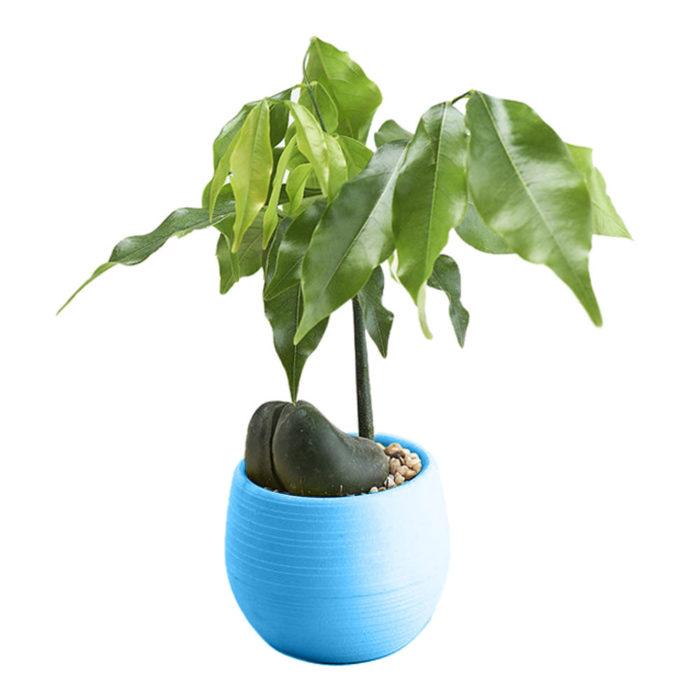 Plastic Plant Pots Home Garden Use