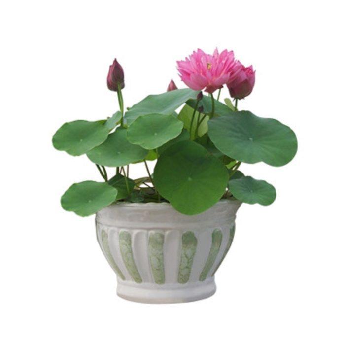 Hydroponic Plants Seeds 20PC Set
