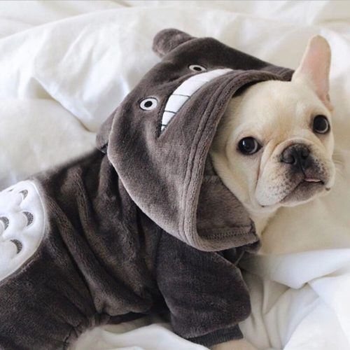 Dog Hoodie Adorable Pet Sweater