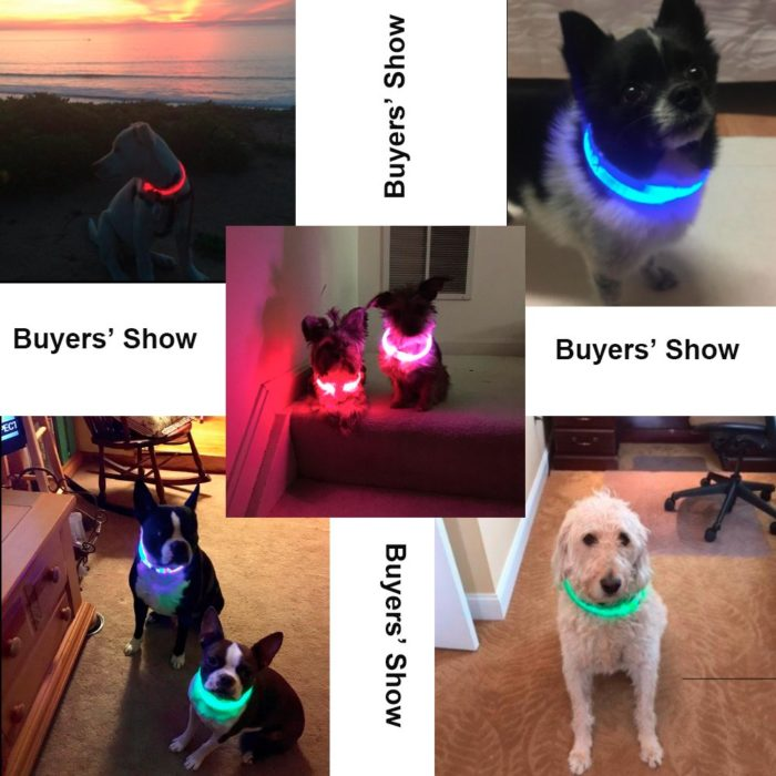 Light Up Dog Collar USB Rechargeable