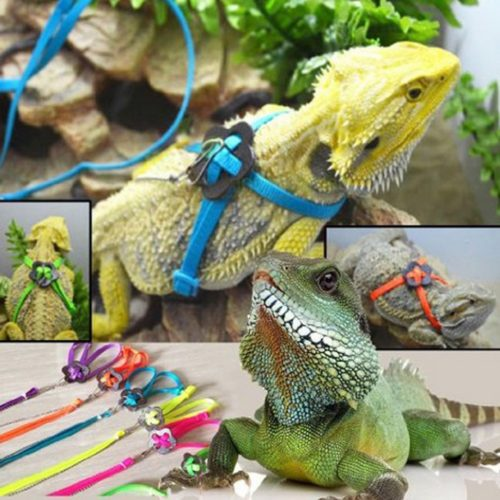 Bearded Dragon Harness Adjustable Leash