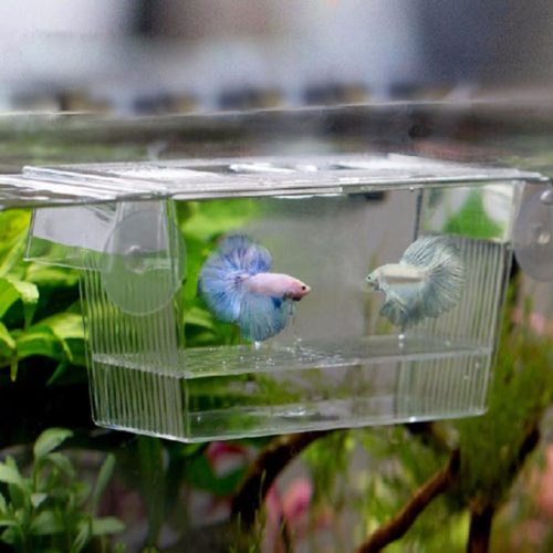 Fish Breeding Box Aquarium Accessory