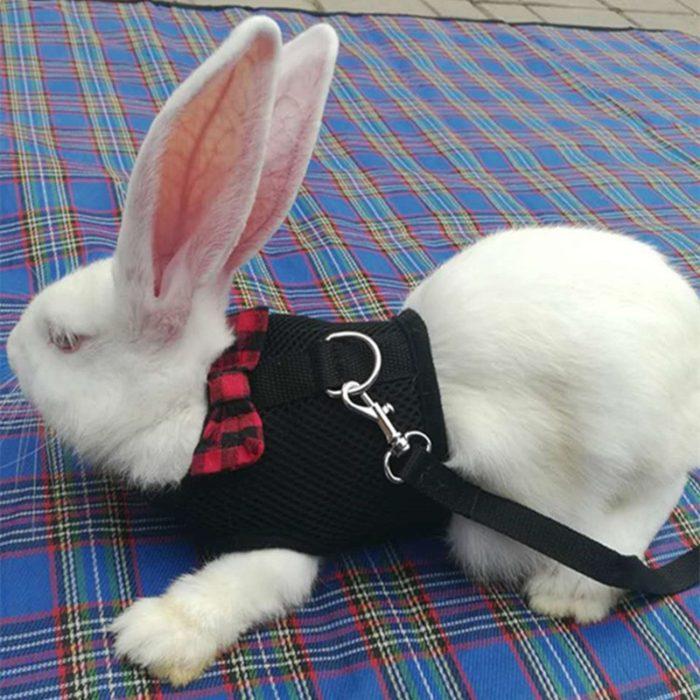 Rabbit Harness Pet Leash