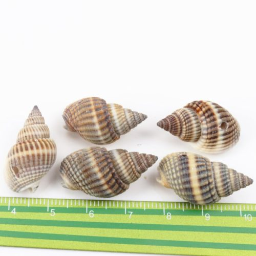 Seashell Decor Natural Spiral Shells