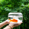 Goldfish Bowl with Mini Landscape