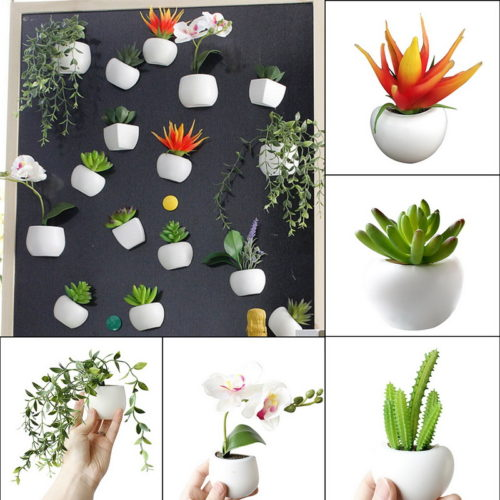 Ref Magnet Mini Plants Magnet