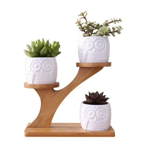 Small Succulent Pots Holder Set
