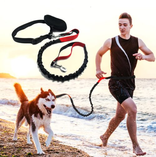 Dog Running Leash Elastic Rope
