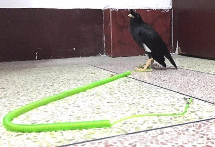 Bird Leash Pet Training Rope