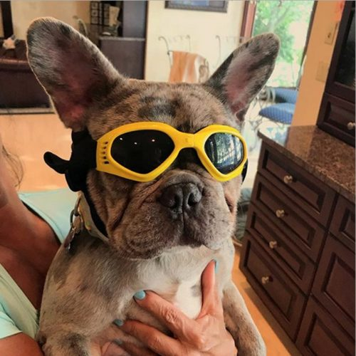 Dog Goggles Anti-UV Pet Accessories