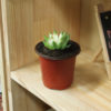 Nursery Pots 100PC Plant Containers