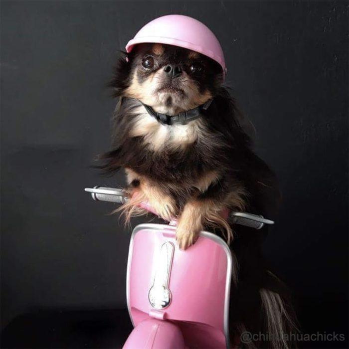 Dog Motorcycle Helmet Dog Head Protection