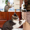 Cat Couch Protector Furniture Cover