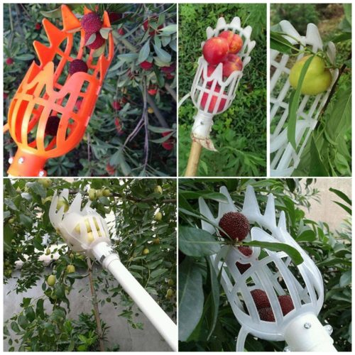 Mango Picker Fruit Harvester Tool