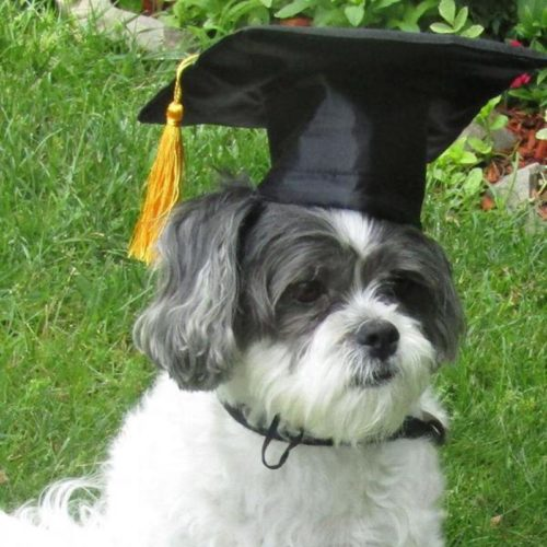 Dog Graduation Cap Pet Costume