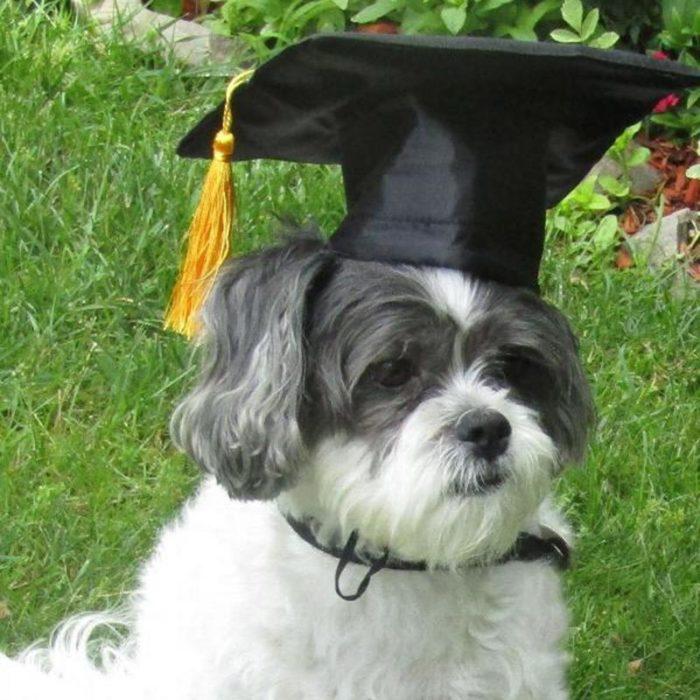 Dog Graduation Cap Pet Costume