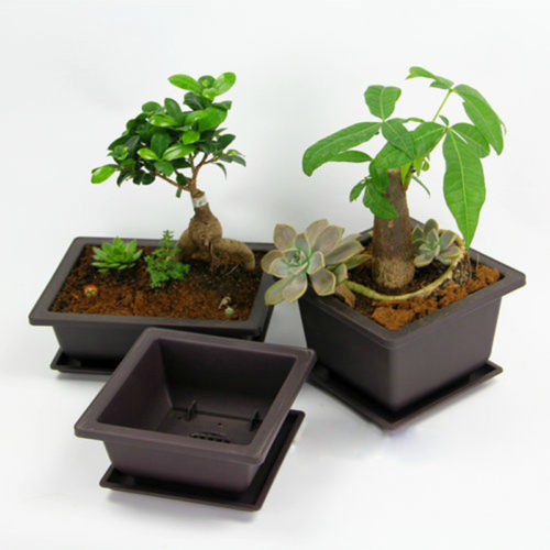 Bonsai Pot Plastic Plant Box