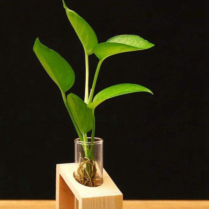 Test Tube Vase Glass Plant Holder