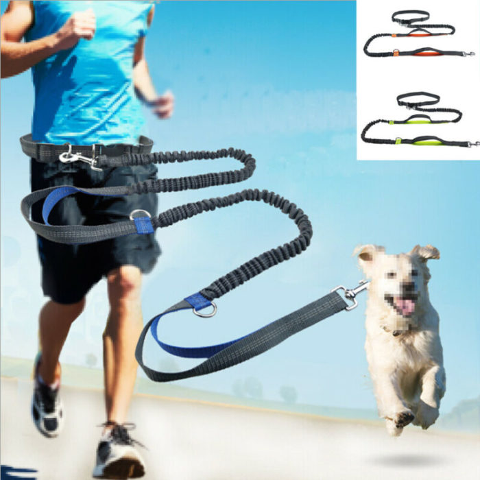 Dog Walking Belt Dog Leash