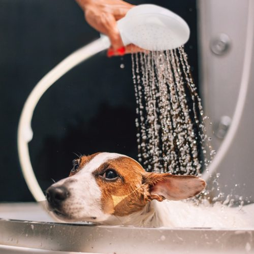 Dog Shower Head Portable Bath