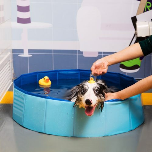 Plastic Dog Pool Collapsible Bath Tub