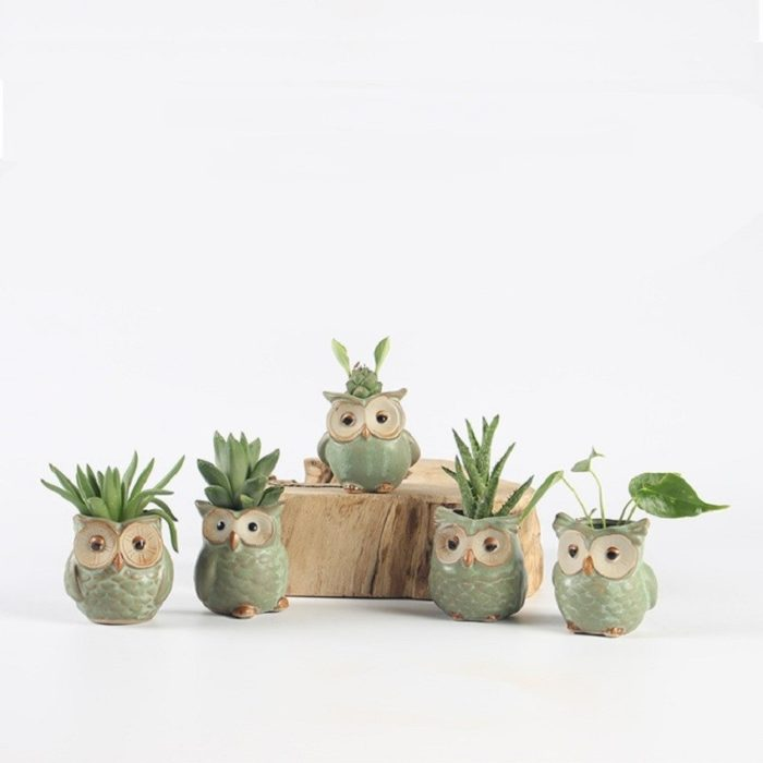 Cute Succulent Pots Owl Design