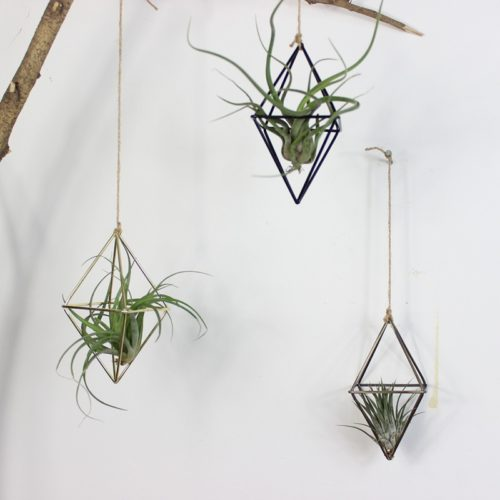 Air Plant Hanger Geometric Holder