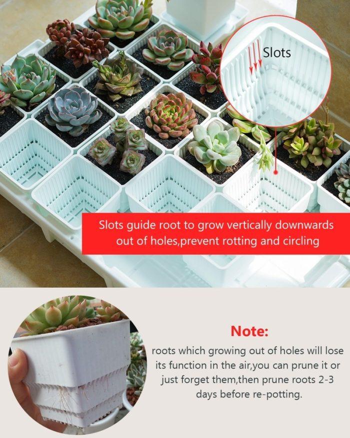 Square Plant Pots Succulent Pots (6Pcs.)