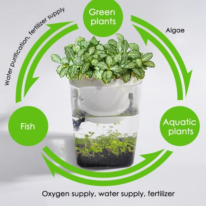 Fish Tank Planter 2 in 1 Plant Pot
