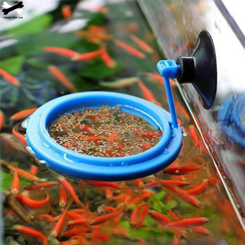 Feeding Ring with Suction Cup