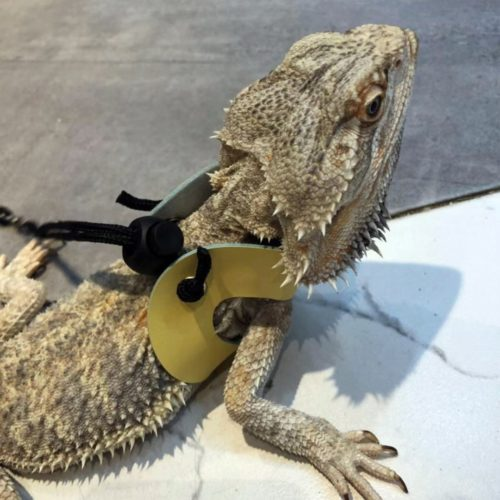 Lizard Leash Adjustable Reptile Harness