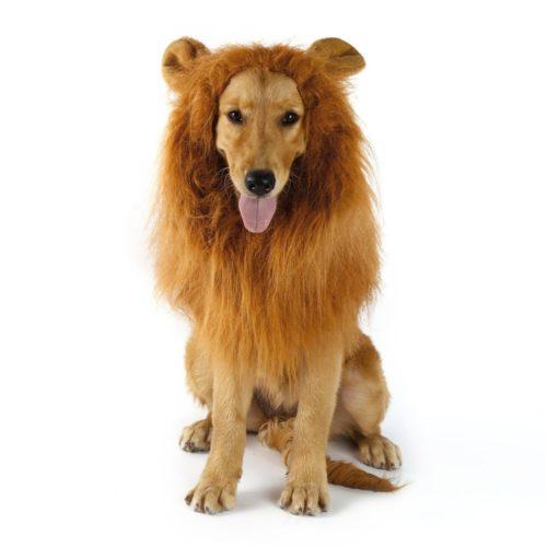 Dog Lion Mane Pet Wig Headwear
