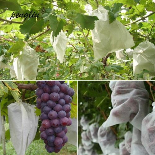 Fruit Protection Bags Fruit Protector (20Pcs.)