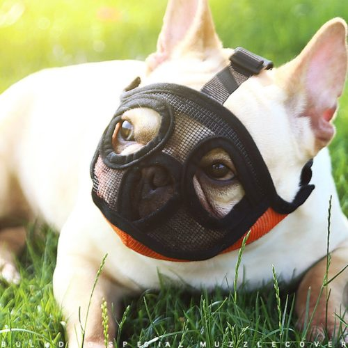 French Bulldog Muzzle Breathable Mouth Cover