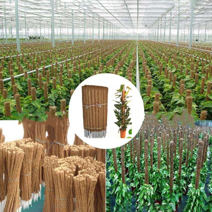Plant Moss Stick Coco Support Stake