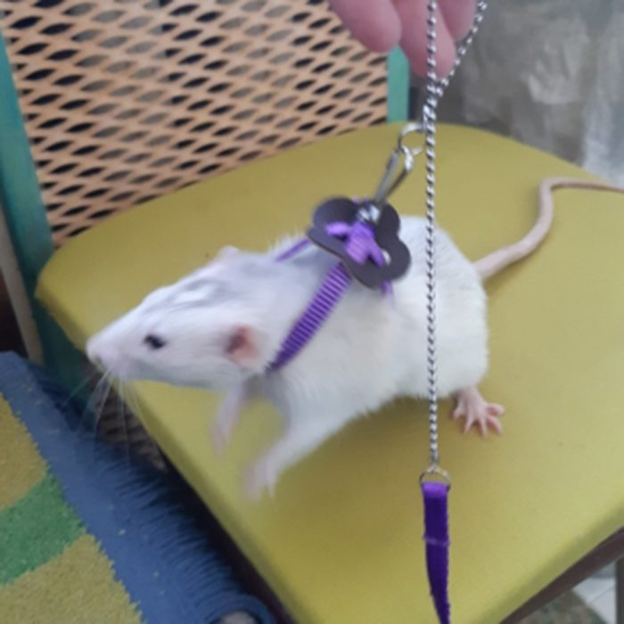 Rat Harness Adjustable Pet Leash